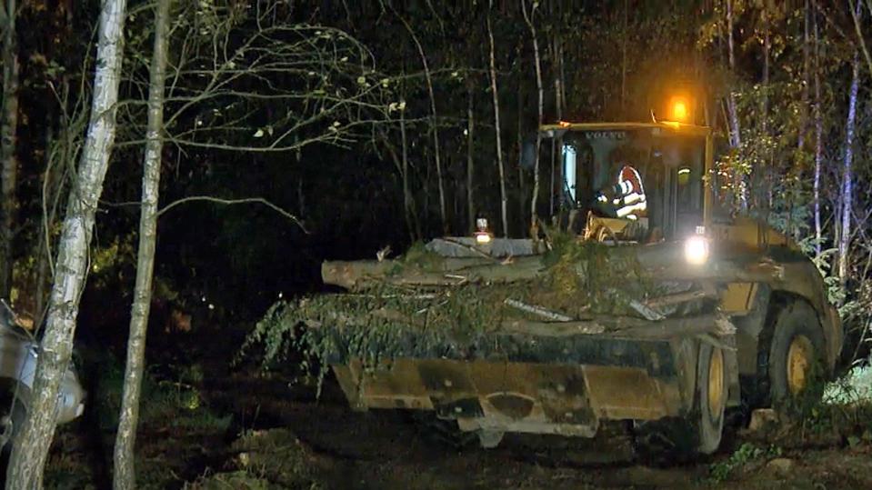 RWE-Bauland - Gericht stoppt Rodung im Hambacher Wald