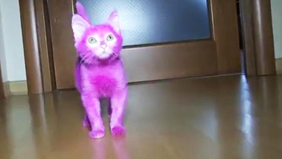 Katze stirbt, weil Besitzerin ihr Fell pink färbt