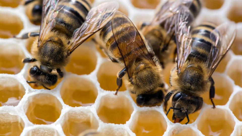 bienen luft gegen heuschnupfen therapie soll bei pollenallergie wunder wirken. Black Bedroom Furniture Sets. Home Design Ideas