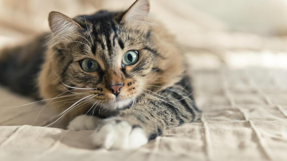 Fellfarbe bei katzen das sagt die farbe ihrer katze ber ihren charakter aus - Wandbelag bei katzen ...