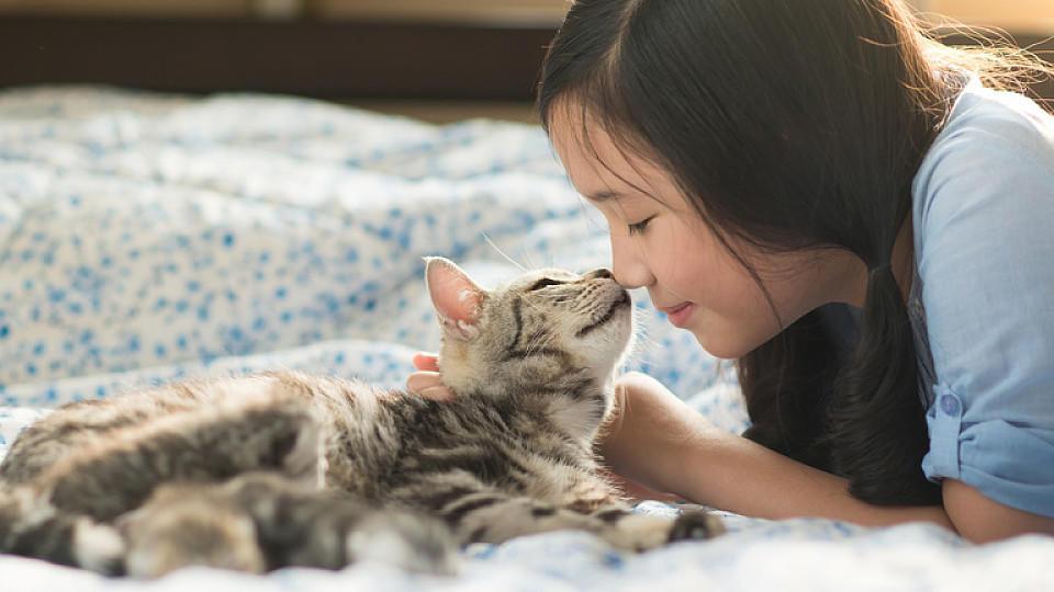 haustiere im bett katzen hunde und co sorgen f r einen besseren schlaf. Black Bedroom Furniture Sets. Home Design Ideas