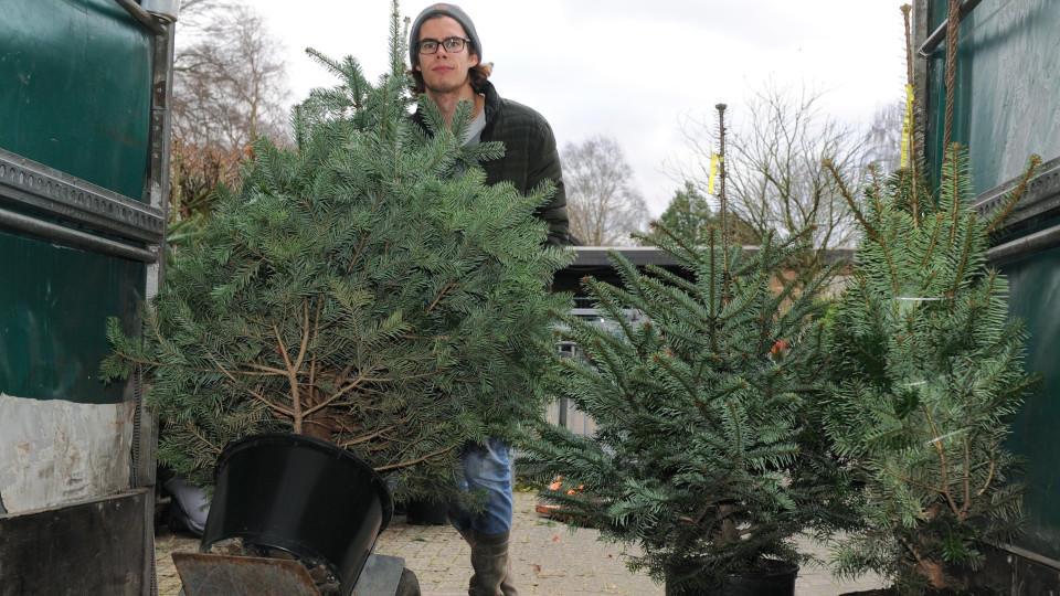Weihnachtsbaum mieten munchenstein
