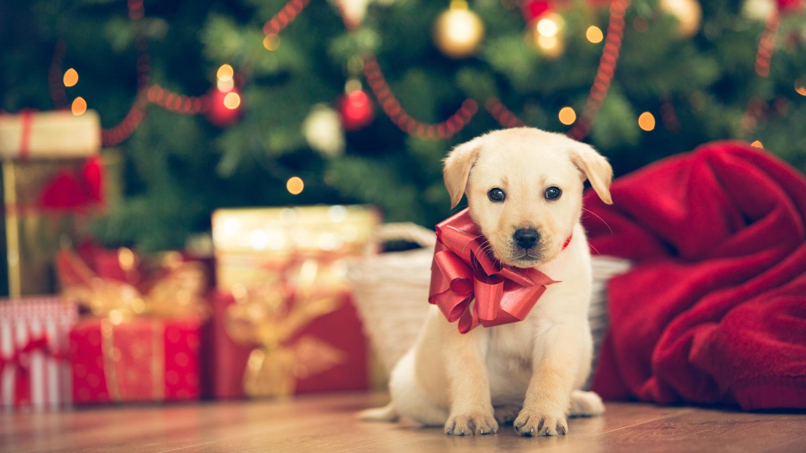 haustiere als weihnachtsgeschenk hund katze co. Black Bedroom Furniture Sets. Home Design Ideas