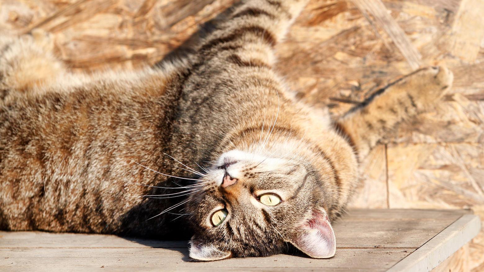 Alles zum Thema Katzen | RTL.de