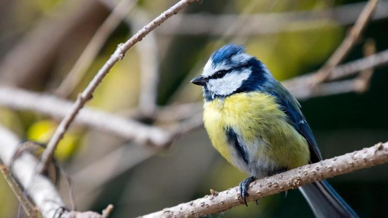 Naturschutzbund ruft zur Vogelzählung auf