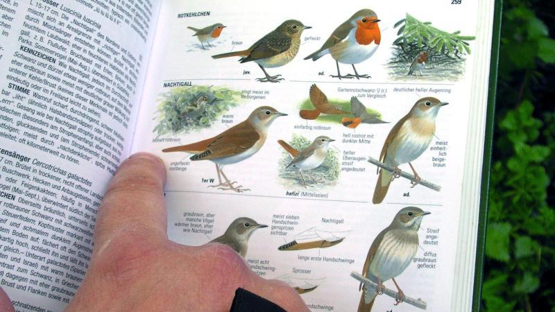 Nabu bittet um Mithilfe bei Vogelzählung in Gärten