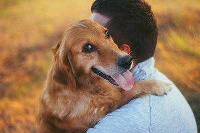 Nach Beißattacken Deutscher Tierschutzbund plädiert für Hundeführerschein