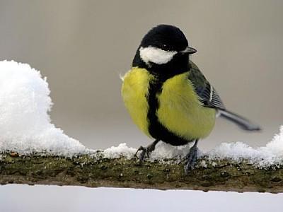 v246gel im winter wie f252ttere ich v246gel richtig
