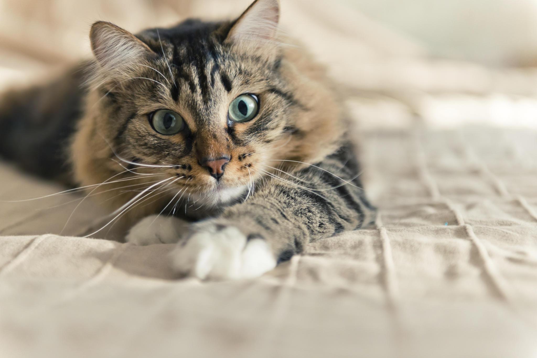 fellfarbe bei katzen das sagt die farbe ihrer katze ber ihren charakter aus. Black Bedroom Furniture Sets. Home Design Ideas