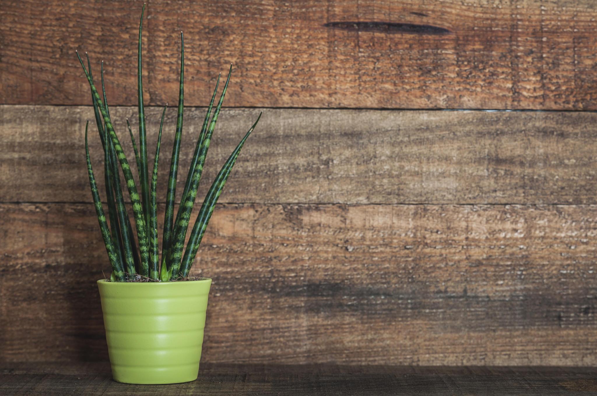 Grunpflanzen Im Schlafzimmer : Mit diesen zimmerpflanzen schlafen sie richtig gut