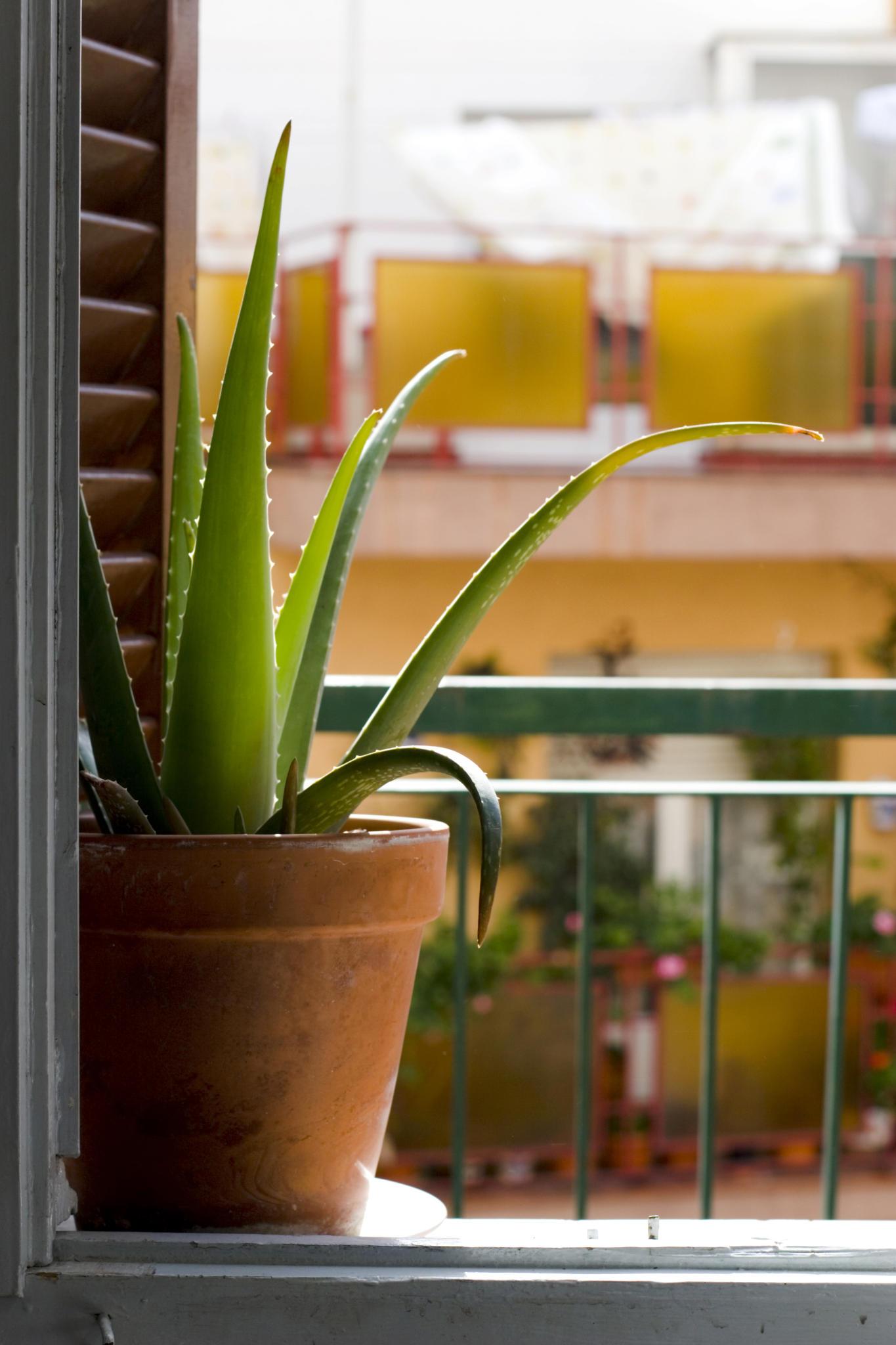 Mit diesen Zimmerpflanzen schlafen Sie richtig gut