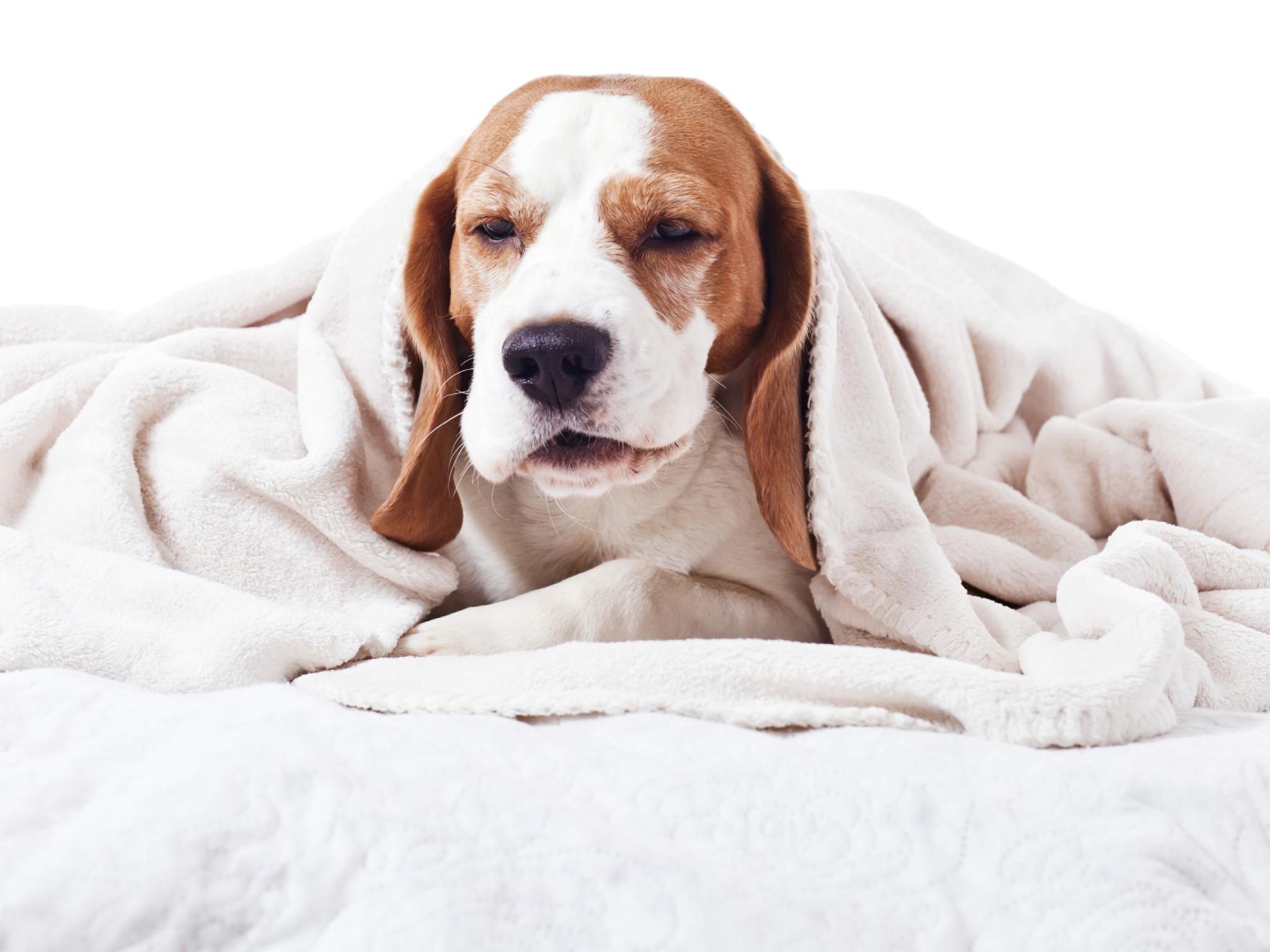 krebs bei hunden anzeichen an denen sie einen tumor rechtzeitig erkennen. Black Bedroom Furniture Sets. Home Design Ideas