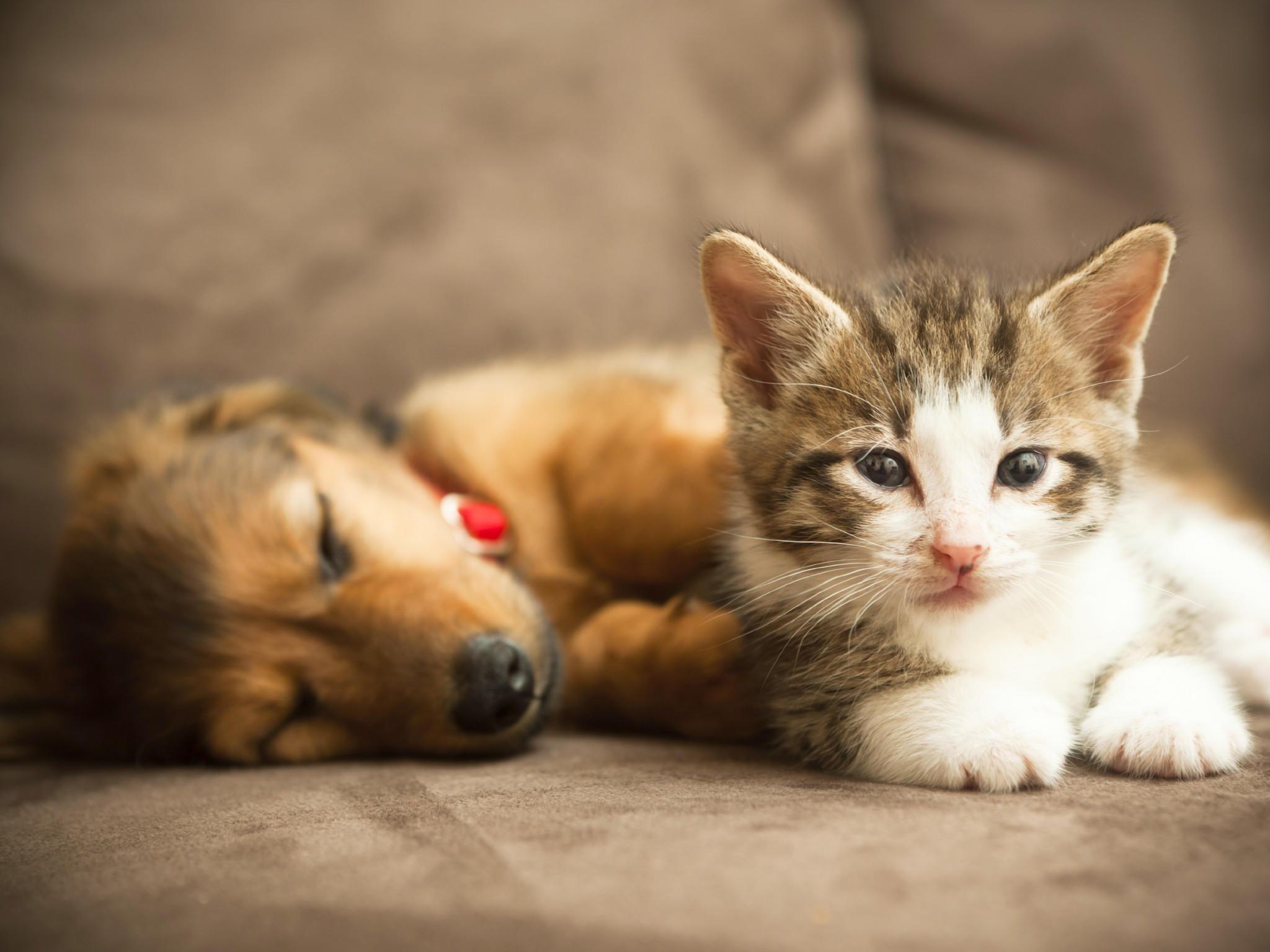 hund und katze kastrieren lassen darum macht eine kastration sinn. Black Bedroom Furniture Sets. Home Design Ideas