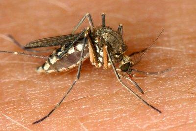 Mücken vertreiben: Was hilft wirklich?
