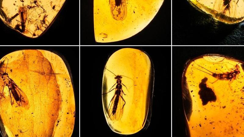 Bildergebnis für fotos von bernstein fliege mick jagger