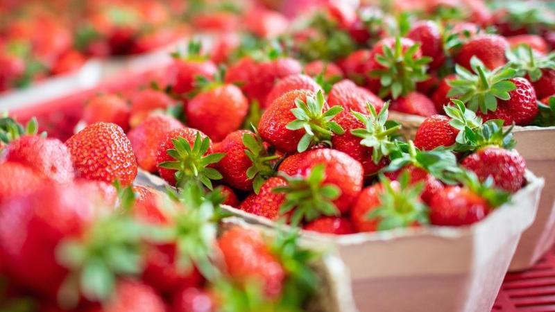 wann erdbeeren pflanzen interesting erdbeerbeet pflanzen with wann erdbeeren pflanzen feld mit. Black Bedroom Furniture Sets. Home Design Ideas