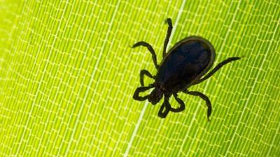 alles zum thema insekten und ungeziefer. Black Bedroom Furniture Sets. Home Design Ideas