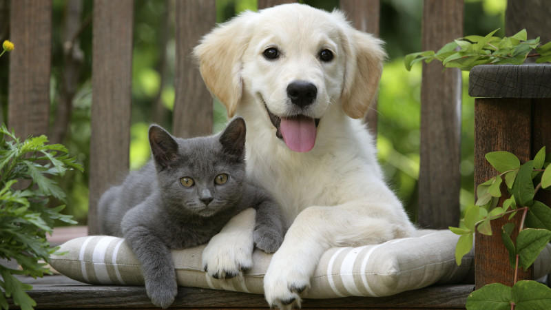 was fühlen hunde und katzen das empfindet ihr tier