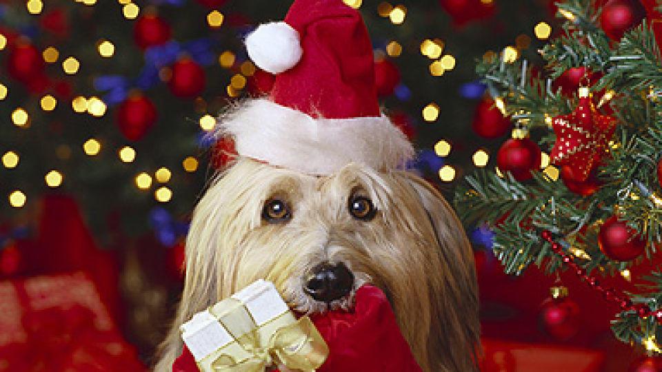 Irre Weihnachtsgeschenke für Hund und Katze