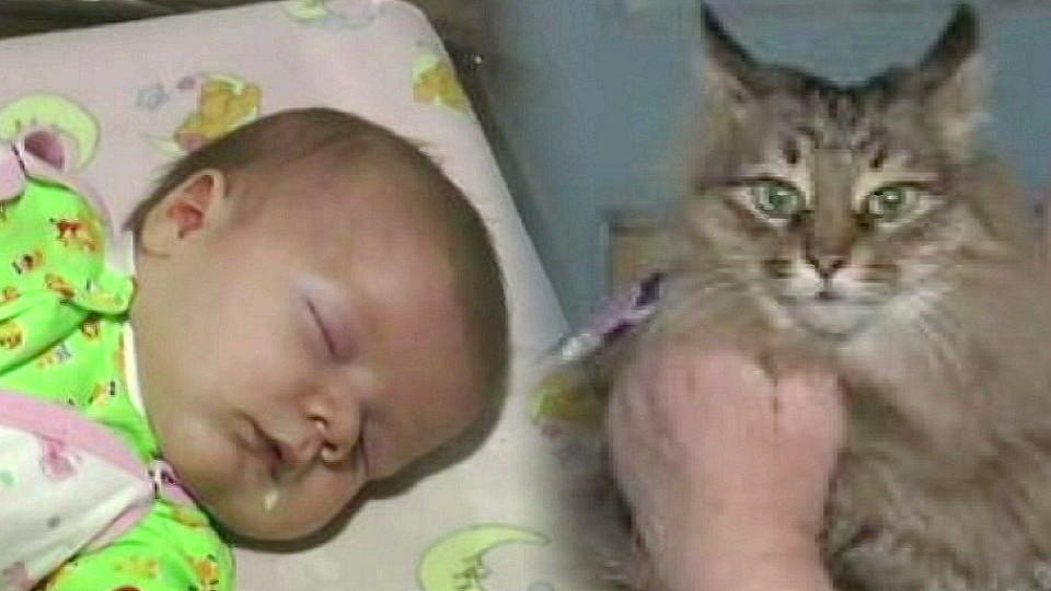 katze rettet jungen das leben