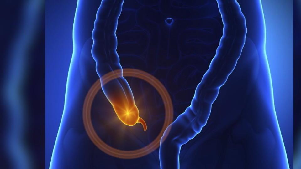 Gallenblase: Diese Funktion übernimmt das Genießerorgan