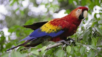 Alles zum thema papagei - Baum auf spanisch ...