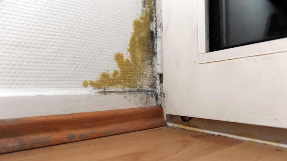 schimmel in der wohnung ist gesundheitsgef hrdend. Black Bedroom Furniture Sets. Home Design Ideas