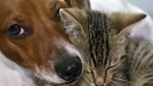 durch katzen übertragbare krankheiten