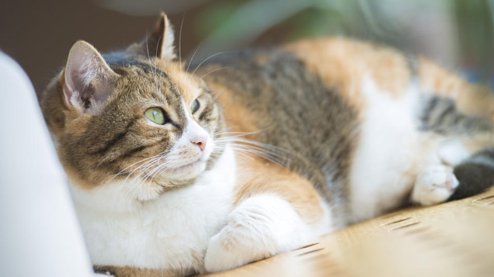 Atemberaubend Eins Zwei Von Katze 5 Draht Fotos - Elektrische ...