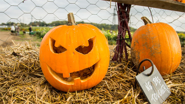 Alles Zum Thema Halloween Rtlde Rtlde