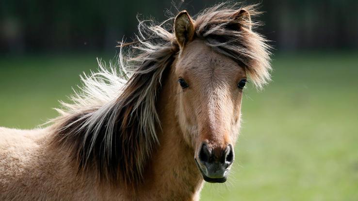 Alles zum thema pferd rtl pferd altavistaventures Images