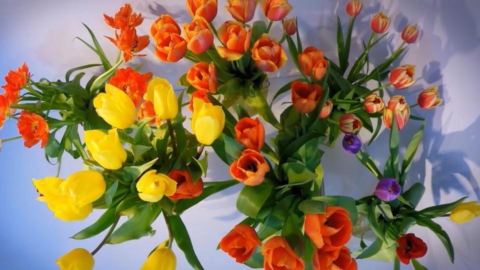 Schnittblumen So Bleiben Tulpen Und Rosen Langer Frisch