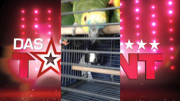 Das Supertalent 2012: Papagei Jacko freut sich auf das zweite Halbfinale