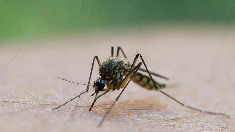 Insektenstiche Zuordnen Was Hat Mich Denn Da Gestochen
