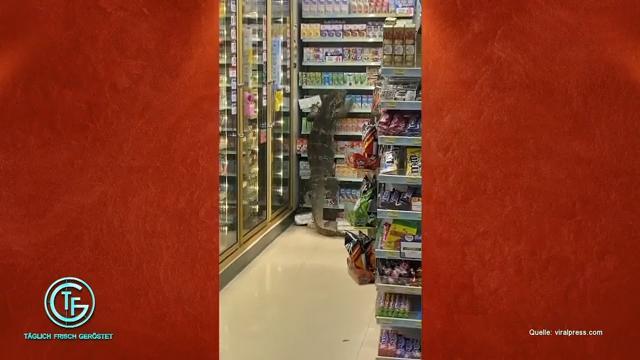 """""""Täglich Frisch Geröstet""""-Stand-Up & Echse im Supermarkt"""